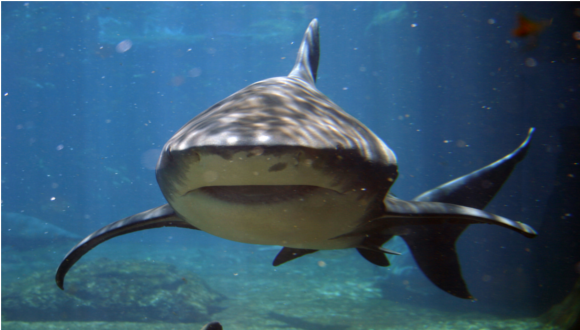 Shark Organisation and organisational learning